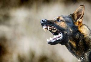 dog bite attorney bozeman